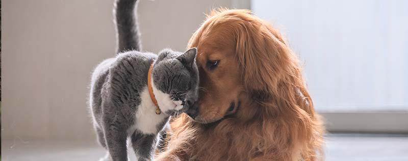 pet veterinary care in Des Moines IA