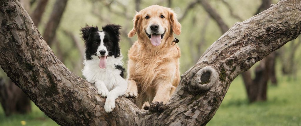 dog-veterinary-care-van-meter