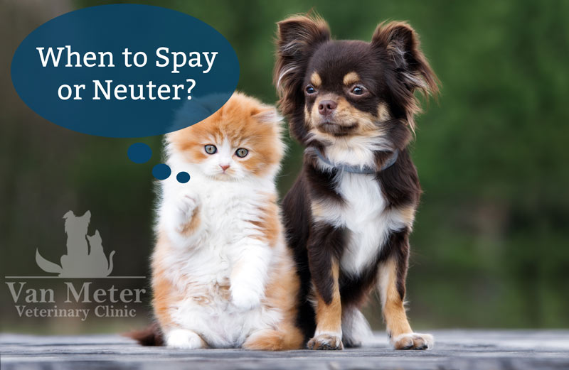Veterinary spay-neuter